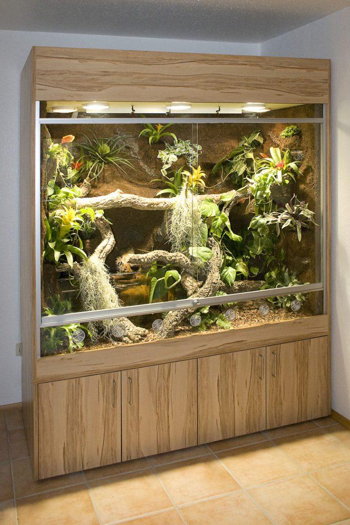 Paludarium für Wasseragamen (australische)