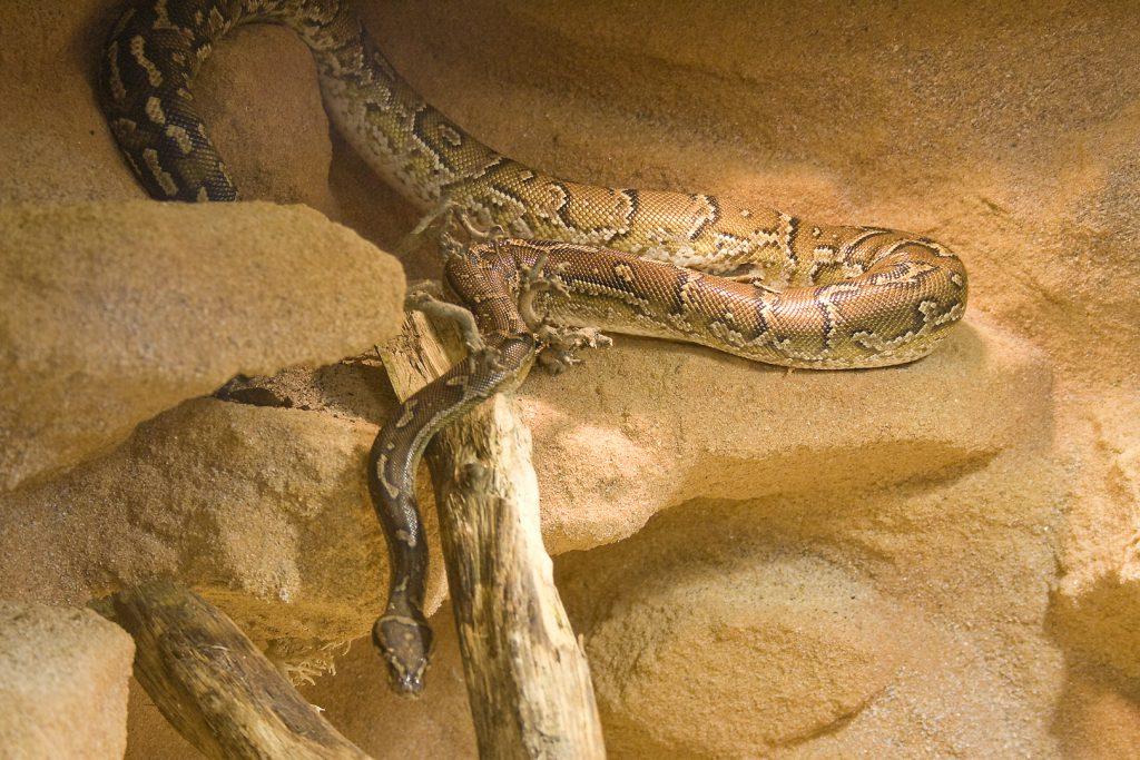 Angola-Python