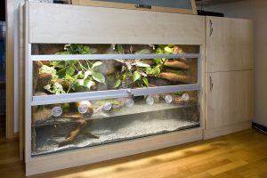 Aqua-Terrarium für Krokodilschwanzechsen