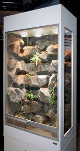 Terrarium für Felsspalten und Mauern bewohnende Reptilien