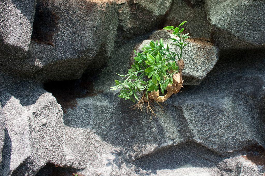 Granit-Felslandschaft