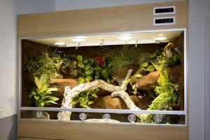 Schlangenterrarium für rote Regenbogenboa mit echten Pflanzen