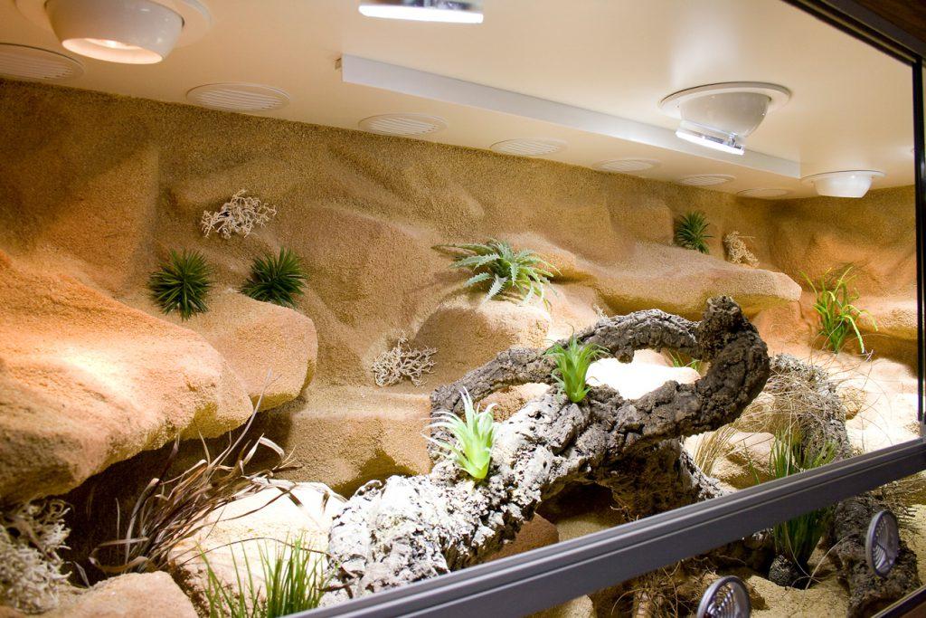 Pflanzen auf den Felsen