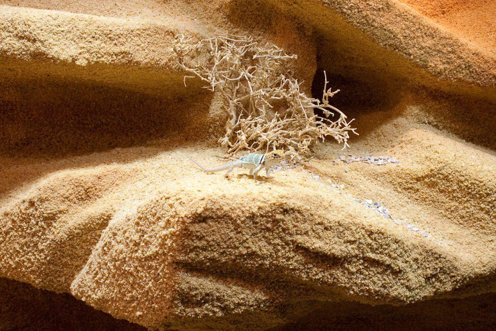 Sandsteinlandschaft