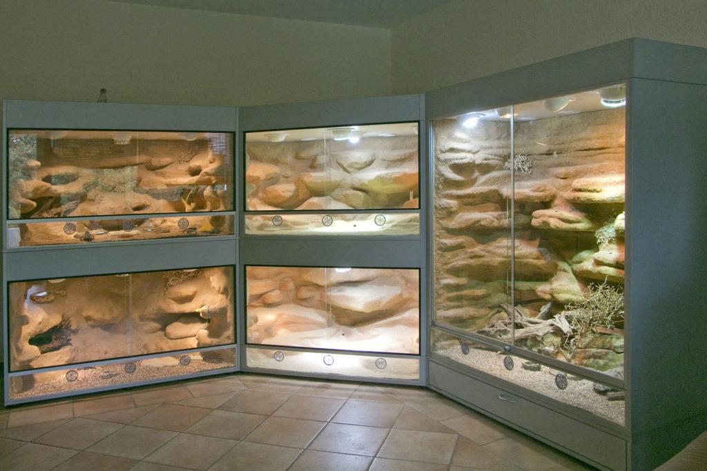 Terrarium für Dornschwanzagamen
