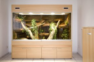 Großes Terrarium für Schlangen (Typ T07): hier für Kornnattern