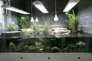 Aqua-Terrarium für Wasserschildkröten und Sumpfschildkröten - nach 2 Jahren
