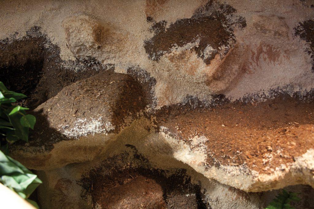 Halbfeucht-Waldterrarium für Schlangen in Sandstein-Waldoptik Typ T07