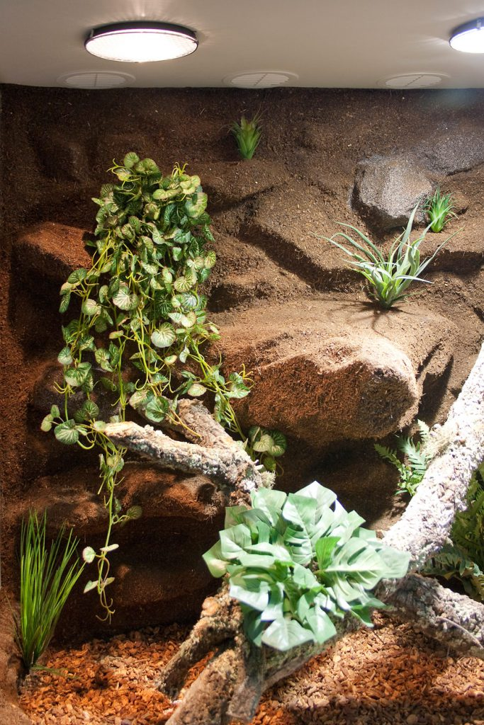 div. Pflanzen