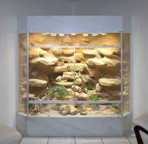 Wüsten-Steppenterrarium in Deltaform für Halsbandleguane