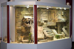 Wüsten-Steppenterrarium im Stil einer Mayatempelanlage