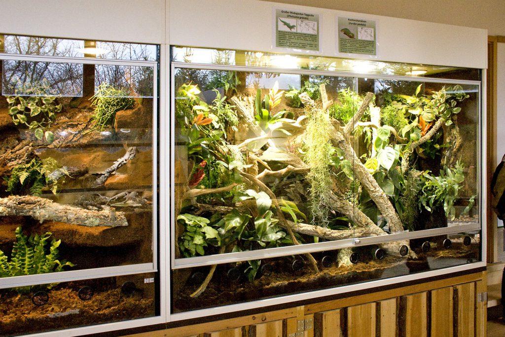 Regenwaldterrarium für Pantherchamäleon und großer Madagaskar Taggecko