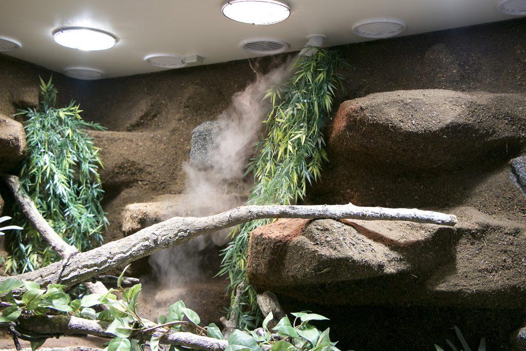 ein terrarium wie ein m belst ck delta paludarium f r australische wasseragamen. Black Bedroom Furniture Sets. Home Design Ideas