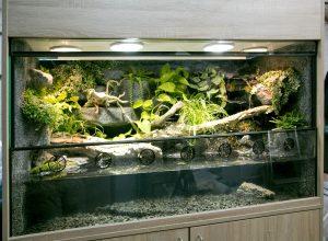 Aqua-Terrarium für Krokodilschwanzechsen mit Wasserfall