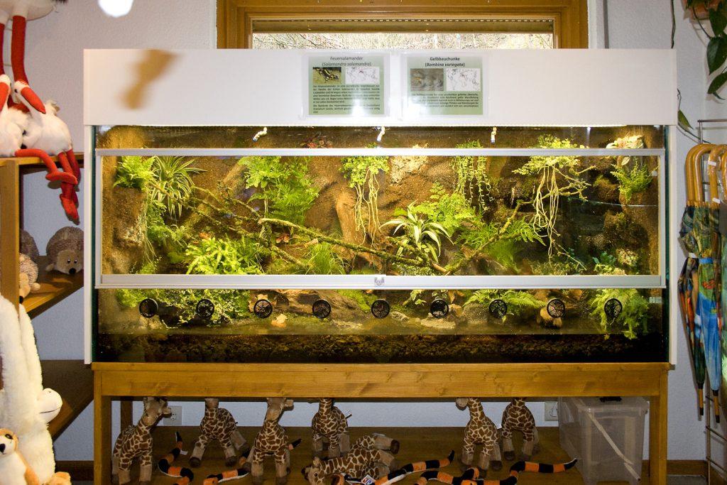 Paludarium für Salamander und Unken