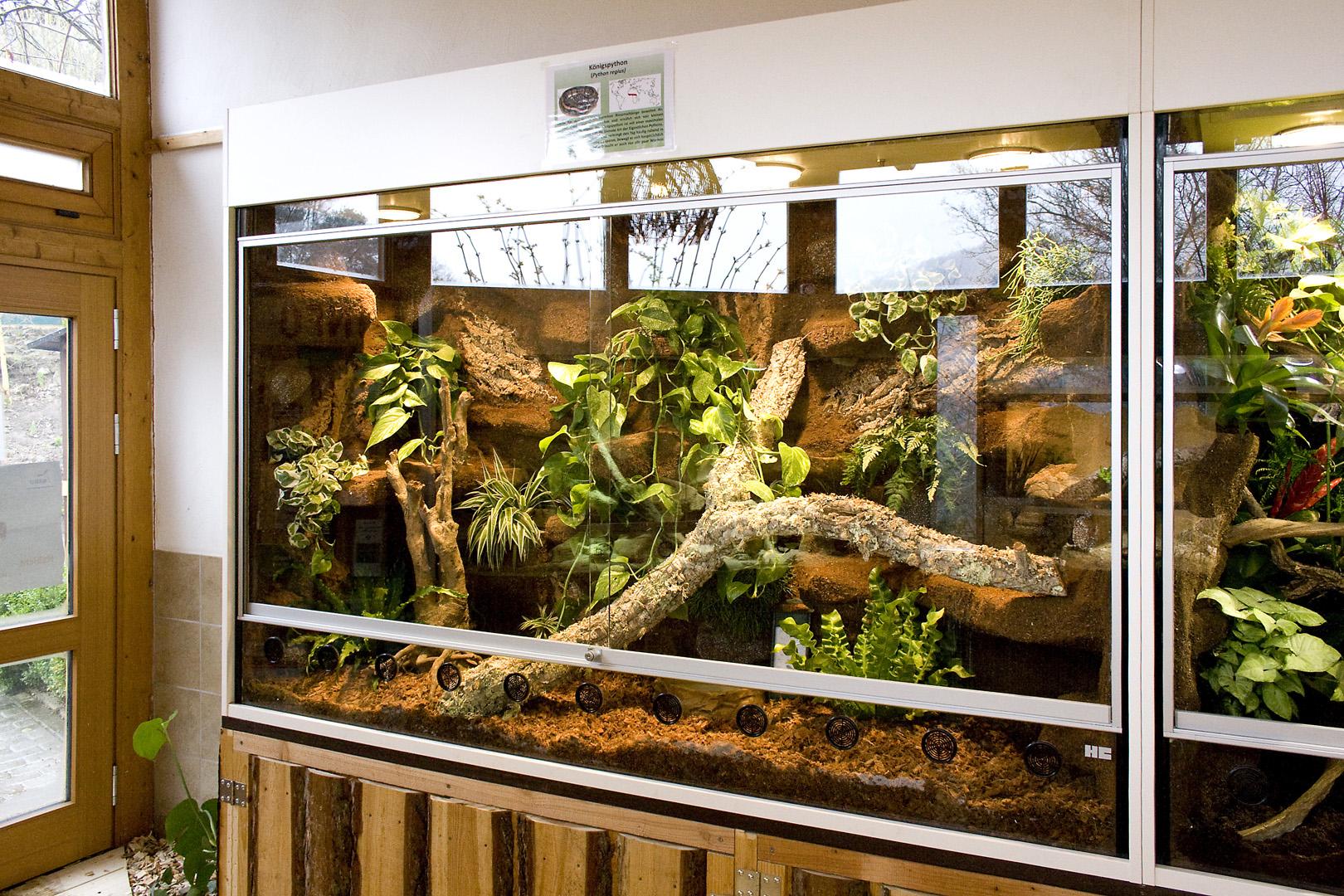 terrarium f r k nigspythons f r den tierpark herborn. Black Bedroom Furniture Sets. Home Design Ideas