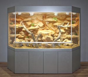 Wüsten-Steppenterrarium in Panoramaform 250 cm lang