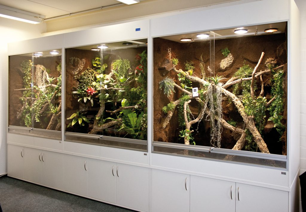 terrarienwand mit 3 terrarien f r pythons f r starpythons in l beck. Black Bedroom Furniture Sets. Home Design Ideas