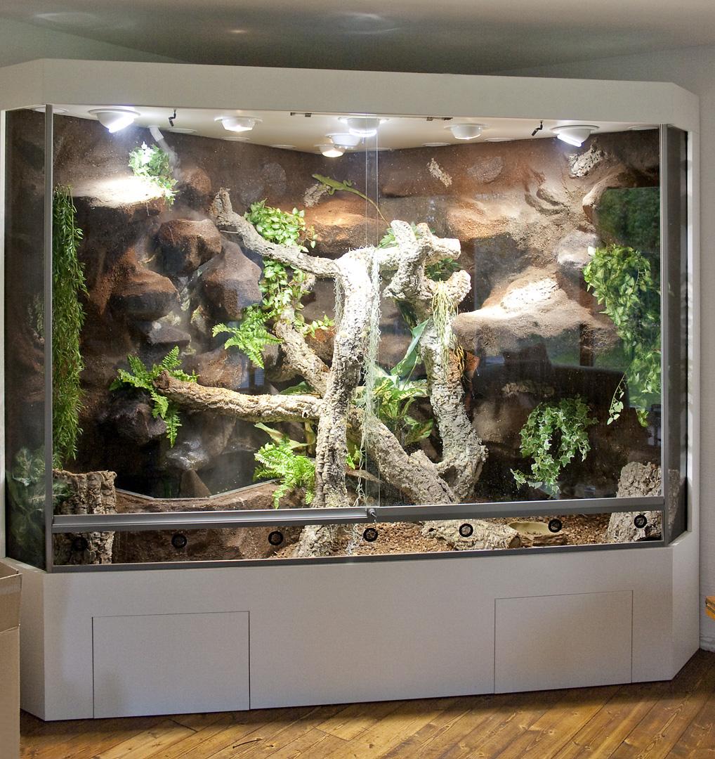 exclusives deltaterrarium f r einen gr nen leguan. Black Bedroom Furniture Sets. Home Design Ideas