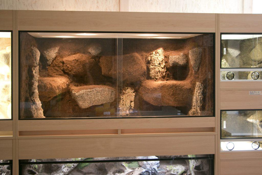 Terrarienwand für die Zooschule des Zoo Landau: Halbfeucht-/Waldterrrarium für Schlangen
