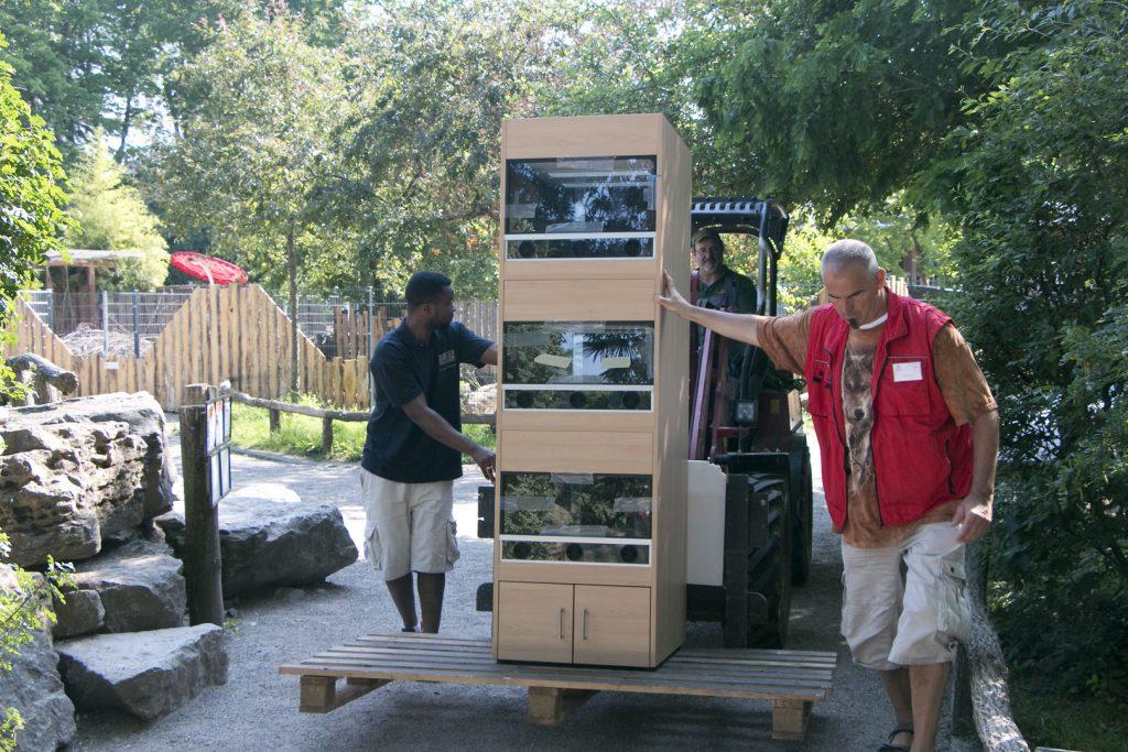 Terrarienwand für die Zooschule des Zoo Landau: Transport per Gabelstapler