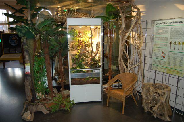 Regenwaldterrarium für das Naturkundemuseum Kassel