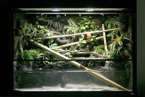 Paludarium für Vampirkrabben, Frösche, Fische und Taggeckos