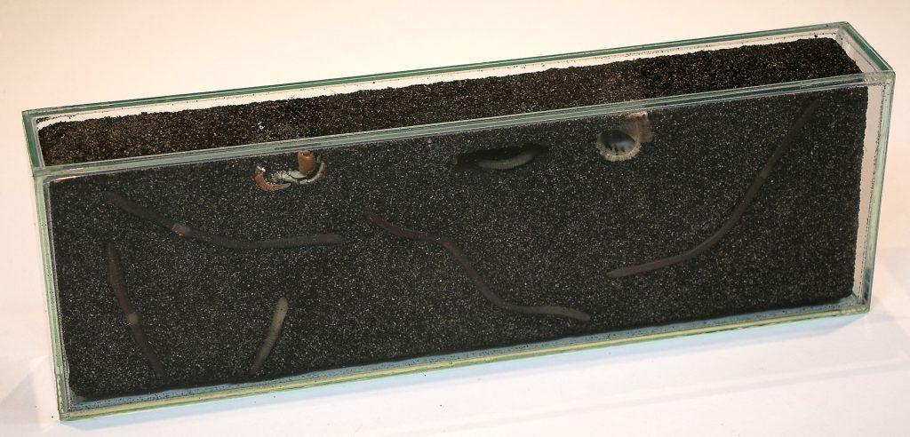 Kleinstterrarium für Regenwürmer für den Aquazoo Düsseldorf