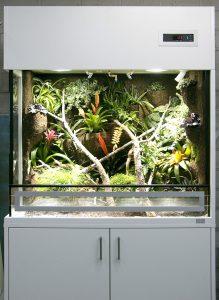 Regenwaldterrarium für Oophaga pumilio (Erdbeerfrosch)