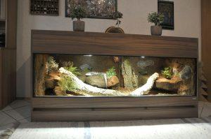 Terrarium für einen Blauzungenskink