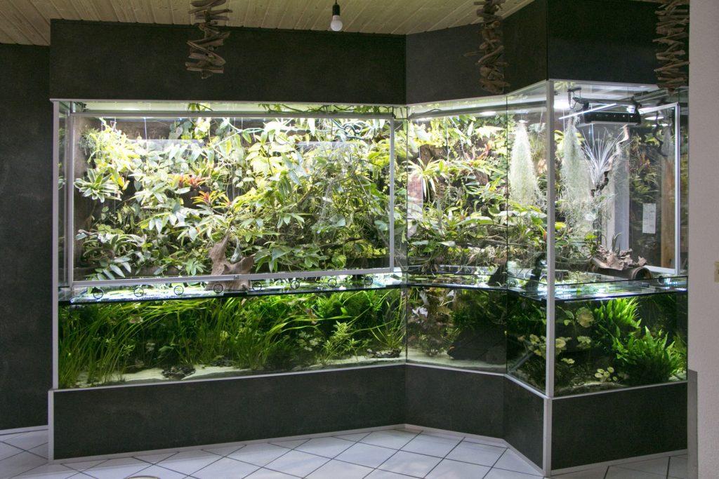 Ca. 5 qm großes Aqua-Terrarium - nach 1 Jahr