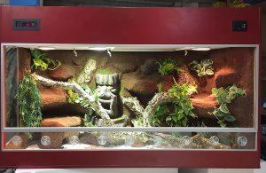 Terrarium für einen Königspython mit einer Urwaldgott-Skulptur