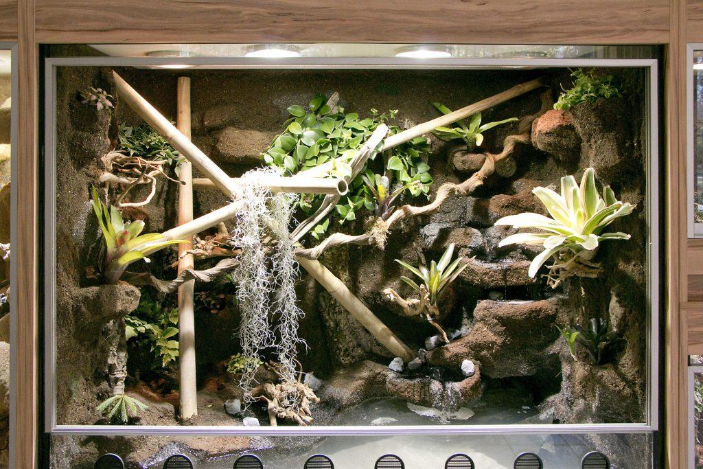 Aquaterrarium für Unken, Laubfrösche und Rotkehlanolis