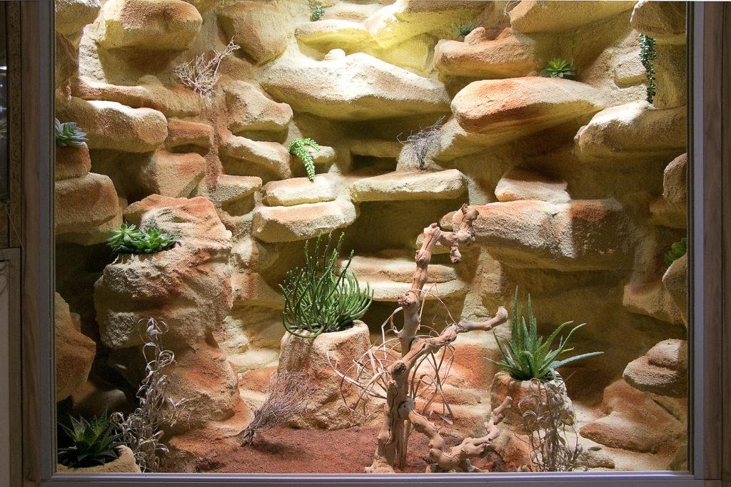 Steppen-Deltaterrarium für Perleidechsen