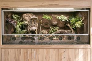 Paludarium für Wechselkröten