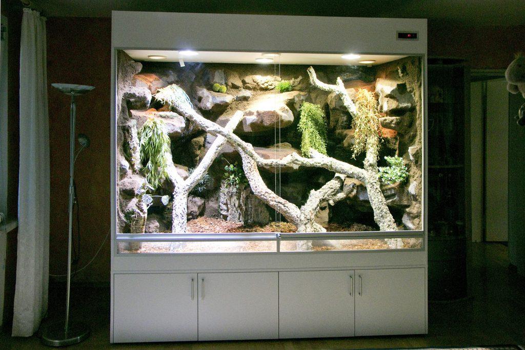 Regenwaldterrarium für einen grünen Leguan