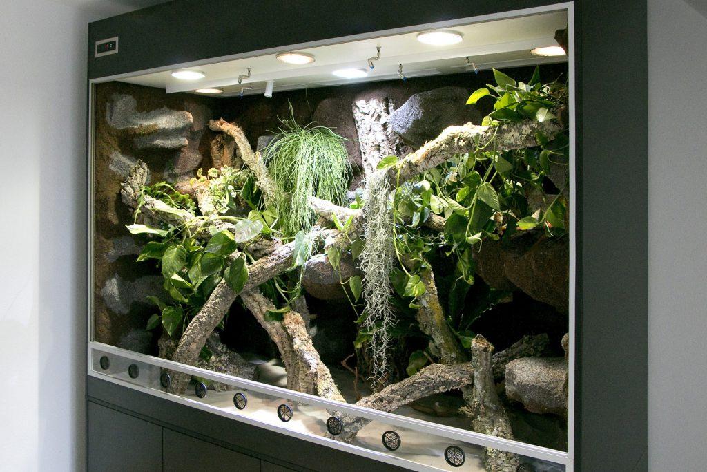 Regenwaldterrarium für Fidschi Leguane
