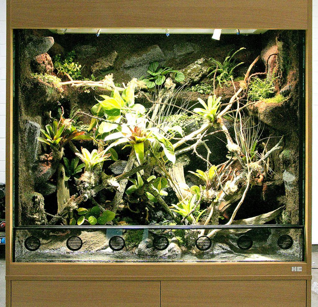 Paludarium für Dendrobaten und Rotkehlanolis