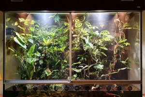 Aqua-Terrarium für verschiedene Laubfroscharten und andere Frösche