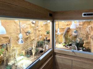 Terrarium für ägyptische Landschildkröten (Testudo kleinmanni)