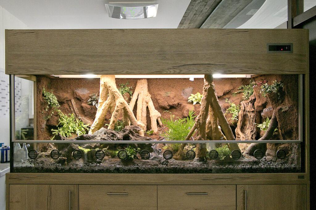 Paludarium für Goldfrösche (Mantella aurantiaca)