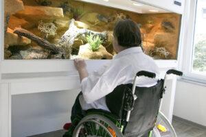 Unterfahrbares Terrarium für einen Rollstuhlfahrer