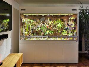 Regenwald-Terrarium für Kannenpflanzen - Nepenthes