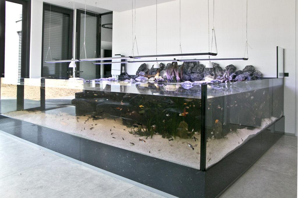 Aquarium für Weichschildkröten, Fische und grüne Wasseragamen